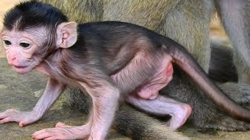 Cute Sherry! It Is Look So Beautiful Baby Monkey Newborn