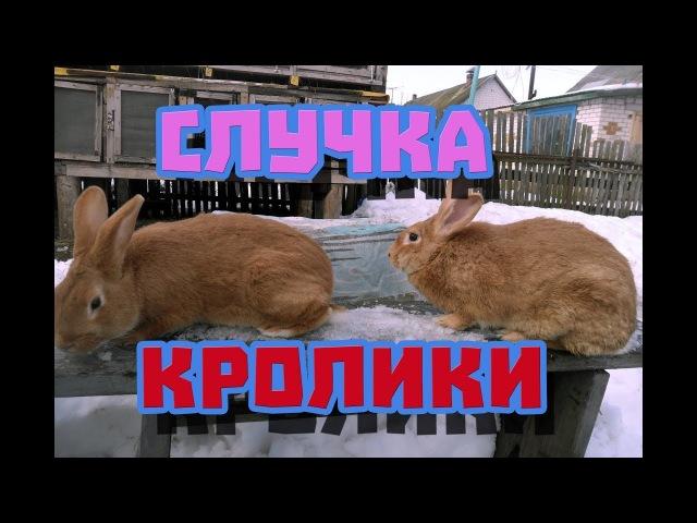 Случка Кроликов, Как Скрещивать Кроликов | Дневник Кроликовода №13| Арболитич
