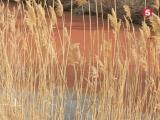 Власти и местные жители по-разному объясняют «кровавую» воду в реке под Краснодаром