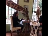 Ничего необычного: просто завтрак в Кении?.