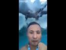 Атака дельфинов
