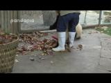 Она просто пытается делать свою работу (VHS VIdeo)