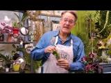 How to Build an Orchid Terrarium