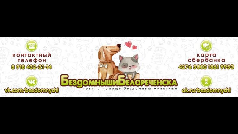 Бездомныши Белореченска