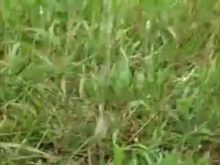 Русская девушка писает в парке голышом
