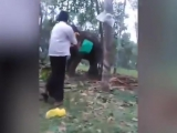 Kerala man tries 'Baahubali' stunt, gets punched in the gut by elephant