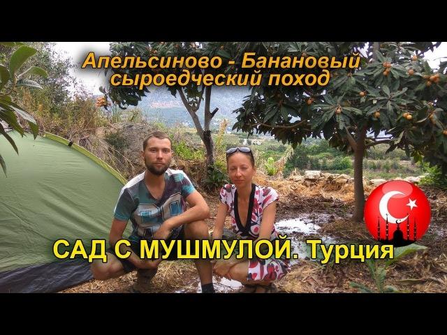 Поставили палатки в во фруктовом саду с мушмулой Турция