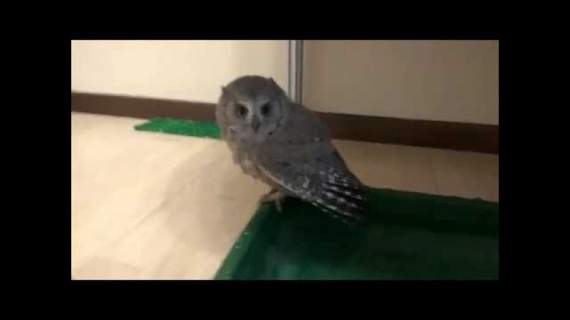 Shurilka the owl and Iggy Pop