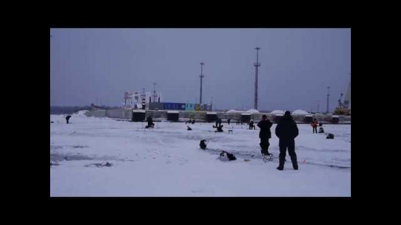 Ловля корюшки на южной дамбе Порт Крон колония Финский залив работа над ошибками