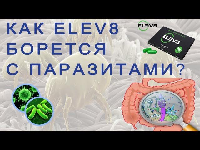 Как ELEV8 борется с паразитами. (Лариса Тарасова, 19.11.2017)