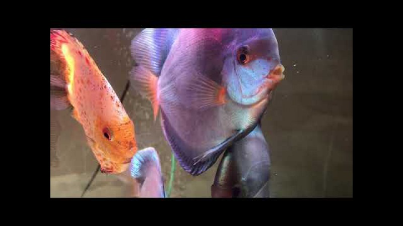 Fish tank 500л