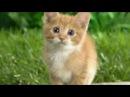Песня Ты мой миленький хорошенький мой котик с картинками котов.