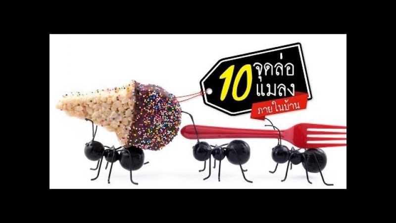 วิธีป้องกัน 10 จุดล่อแมลงเข้าภายในบ้าน