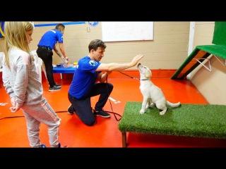 Николь и Лаки у САМОГО КРУТОГО Тренера по дрессировке Собак / Как научить щенка К...