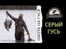 Охота на серого гуся. Звёздный час