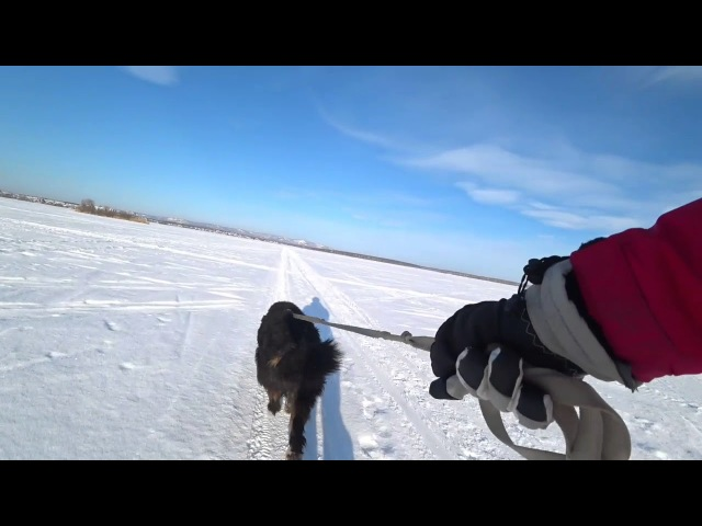 Выгуливаю пса на лыжах Касли