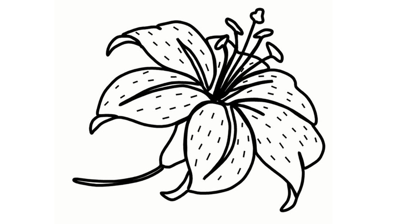 How to Draw A Lily Flower Easy Step By Step coloring pages for kids
