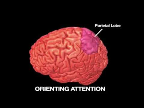 TED на русском - Как видеоигры влияют на мозг. Дафна Бавельер
