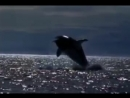 Michael Jackson - Free Willy (will you be there)