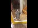Кошачий танец Хава Нагила