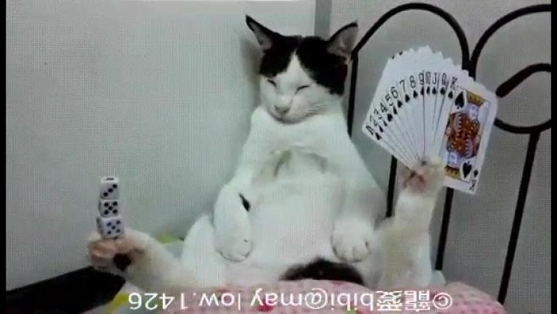 Кот, который познал дзен