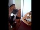 Бешеный кот 2