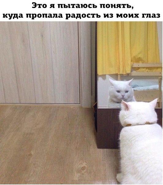 прикольное фото