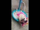 Собака своем волне Типичный Кавказ