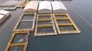 «Китовая тюрьма» в Приморье беспилотник заснял вольеры с десятками белух и косаток