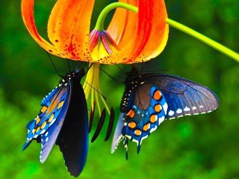 Живые тропические бабочки в зимнем городе