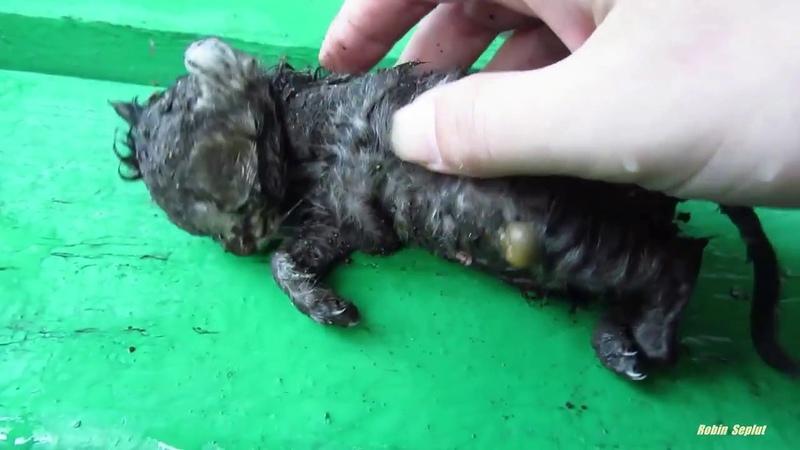 Котенок найденный после ливня. Чудесная история исцеления малютки.
