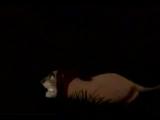 Элтон Джон  Король лев очень хочется пустить слезу под этот клип