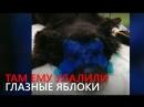 Собаке выжгли глаза кислотой и оставили умирать 18
