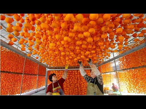 Amazing Asia Agriculture Fruit Harvesting and Processing Compilation 5 - Asian Dried Persimmon