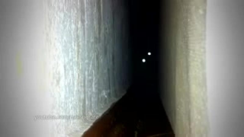[v-s.mobi]Кот скример.mp4