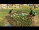 Вести Москва Цветочное оформление Москвы в приоритете тюльпаны в