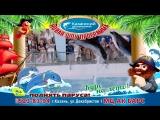 Поднять паруса! Курс на лето! - новая шоу-программа в Казанском дельфинарии