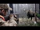 Охота на лося – красивые, уникальные кадры..