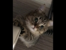котик которого обидели