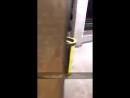 Scène de la vie parisienne - De Condor | May 26, 2018 Dans le métro parisien, les singes s'amusent