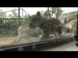 В зоопарке на востоке Парижа родились детеныши ягуара