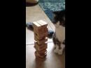 Кот играет в дженгу