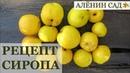 Как сделать сироп из ягод и фруктов / Сироп из хеномелеса или цидонии
