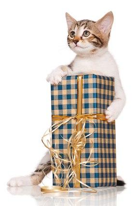 Подарки для котов на день рождения 800