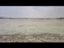 Отлив на Красном море