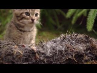 В шотландских горах обнаружили и спасли двух редчайших диких лесных котов