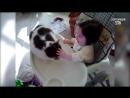 Приколы с Котами - Смешные коты и кошки 2017 _ ТЕСТ НА ПСИХИКУ, ПРОБУЙ НЕ СМЕЯТЬ