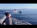 Во время занятий вейкбордингом на море Кортеса к этой девушке вдруг решили присоединиться дельфины.