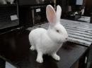 Чем можно кормить кроликов МОРКОВЬ Растения полезные и ядовитые