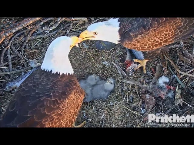 M15 Feeds His Lady Love Harriet; E11 Goes For 2nd Steal 1.4.18~SWFL Eagles